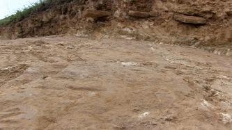 Spontaneous Archaeology 14